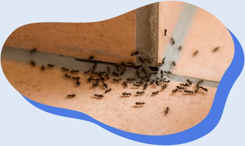 Lutter contre les insectes avec Alternative 4D